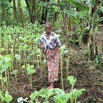 Sustainable Production of Staple Leafy Green Vegetable Crops in Sub-Saharan Africa