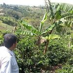 Sustainable Coffee: A Better Model for Smallholder Farmers