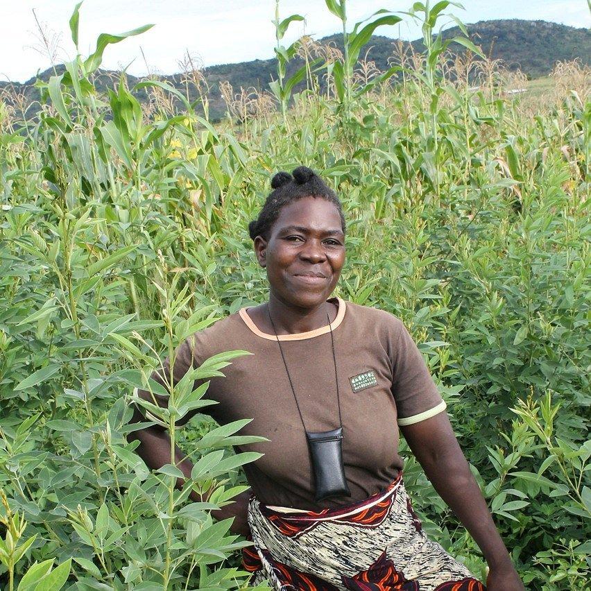 Healthy Soil + Fertile Land + Food Security