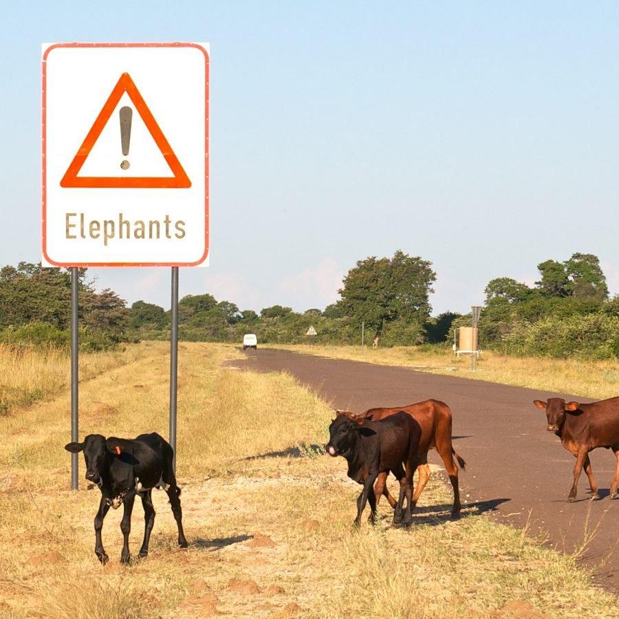 Wildlife-Friendly Beef