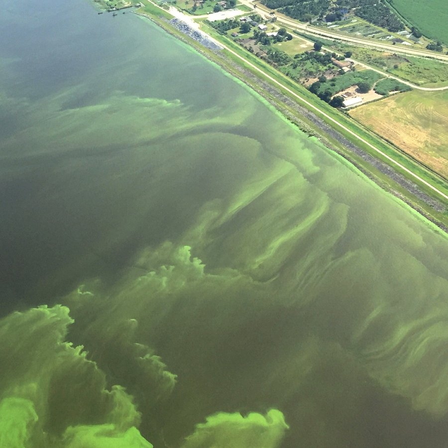 The Role of Nitrogen in Toxic Blooms in the Finger Lakes