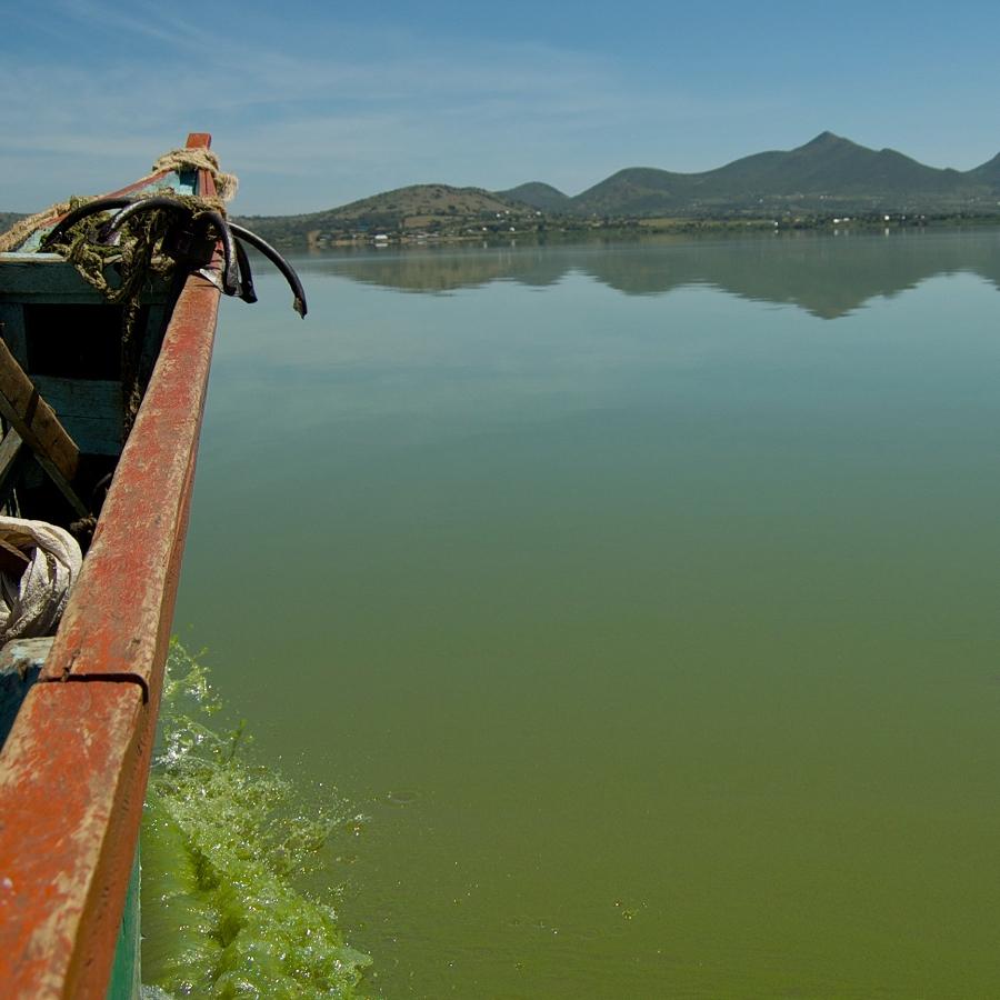 Spoiling Fish as Food: Harmful Algal Blooms in Lake Victoria