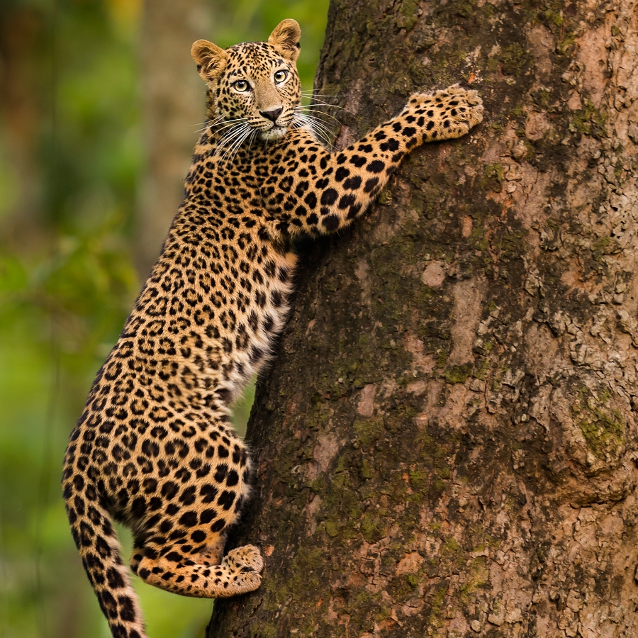 Living with Leopards: Exploring Effects of Human-Leopard Interaction on Food Security and Public Health