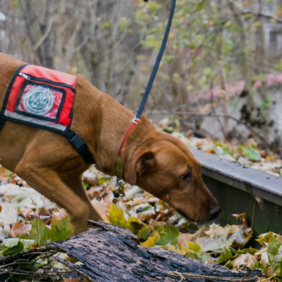Training Dogs to Sniff Out New Pests