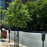 Urban Trees for Sustainable Cities