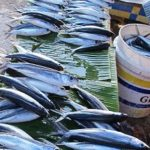 Financing Sustainable Fisheries