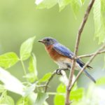 Nature and Well-Being: The Role of Birding and Nature Engagement During COVID-19