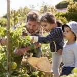 A Sociological Assessment of Community Garden Responses to the 2020 COVID-19 Pandemic