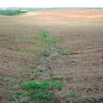 Soil Health Assessment, Management, and Policy to Support Sustainable Land Management in China