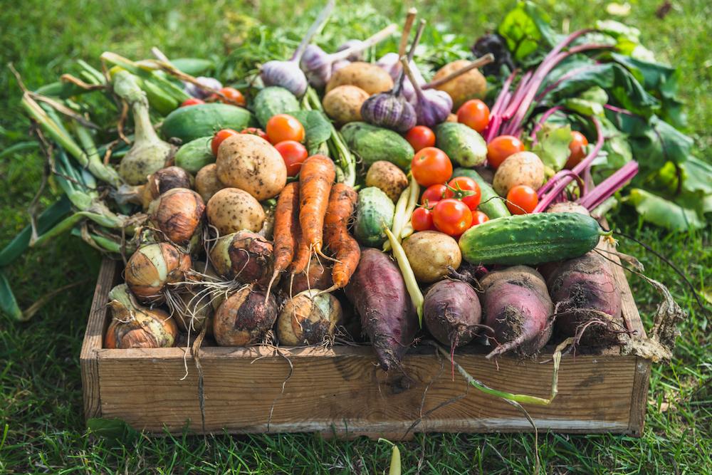 Cornell Atikinson - Food Security