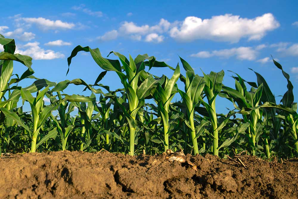 Cornell Atkinson - Regenerative Agriculture Project
