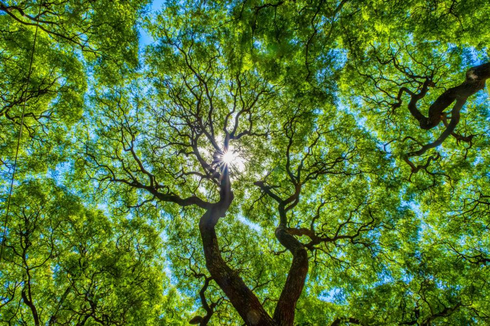 subtropical-forest-Lezama-Park-Buenos-Aires-scaled.jpg
